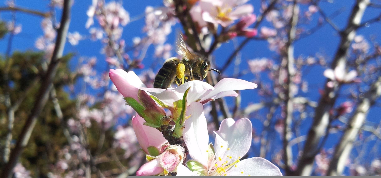 La miel en el mundo