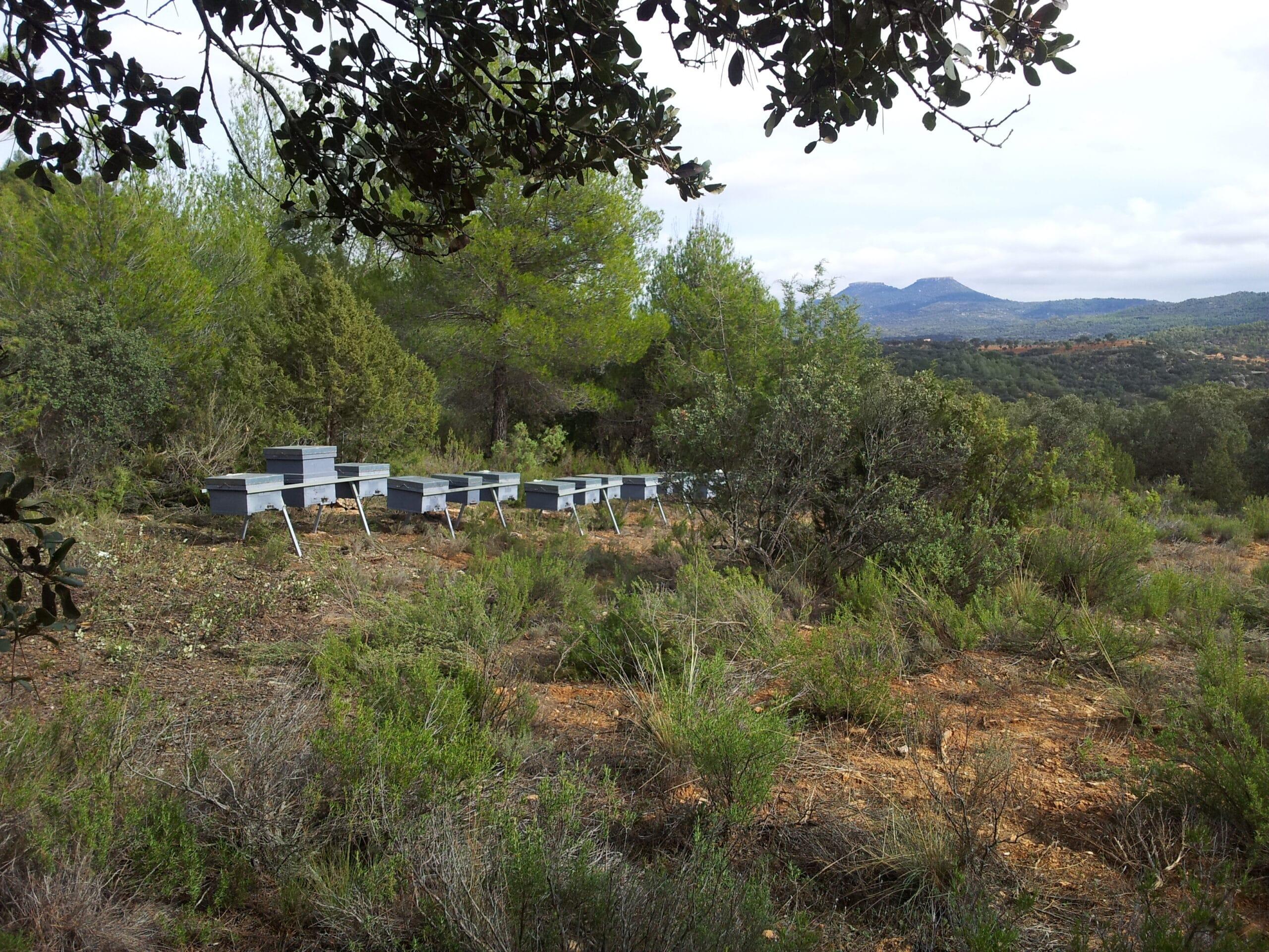 Colmenas Nectarius en su habitat