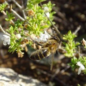 Miel de la alcarria ecológica de espliego y ajedrea (310g)